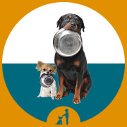leer je hond leuke en nuttige hondenkunstjes