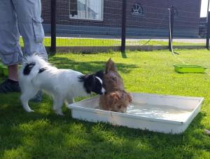 spelen en socialiseren voor kleine honden