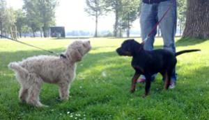 leer hond hond ontmoetingen inschatten