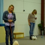 labradoodle en jack russel oefenen aandacht tijdens les
