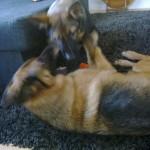 2 honden samen