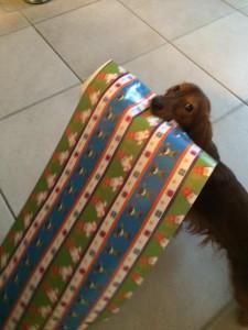 sinterklaas surprise voor je hond 2015-1