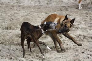 leer hond hond ontmoetingen en interacties inschatten