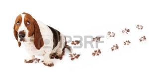 waarom kijkt een hond schuldig