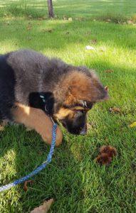 pup onderzoekt de wereld ook met zijn bek